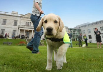 Nordson Dage and the Irish Guide Dogs for the Blind